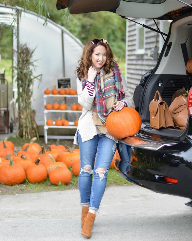 Pumpkin Patch in MA