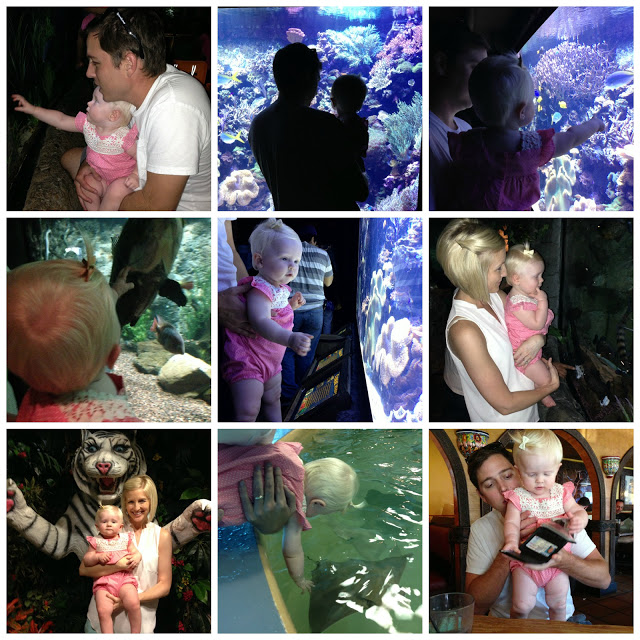 Afternoon at the Aquarium