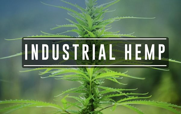 Image result for industrial hemp