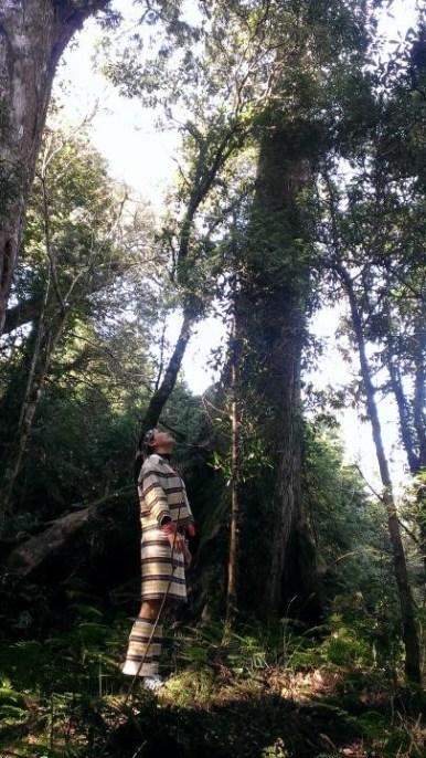 秘境130 130線林道