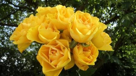 roses-980731_1280