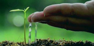 Взращивать росток как не останавливать благие дела после Рамадана