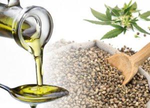 konoplja ulje konoplja semena cannabis sativa, omega 6,omega 3 masne kiseline, gama linoleinska kiselina, stearidonska kiselina,polinezasićene masne kiseline ulje konoplje cannabis sativa Hladno prešano ulje konoplje Hemp Seed Oil 300x217