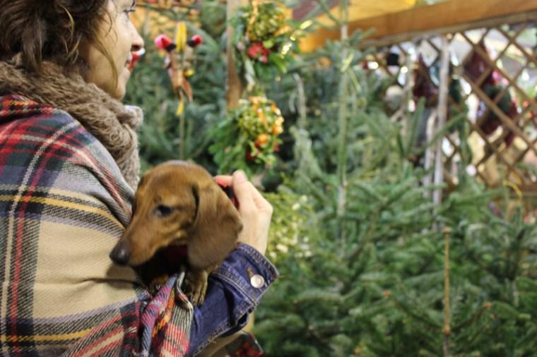 Рождество в Барселоне Лёли Латышевой, hozayka_travy