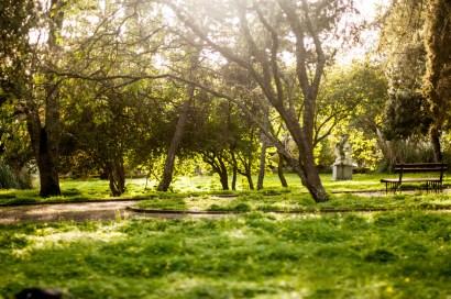 Sol og trær