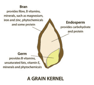 grain kernel diagram 230v 3 phase motor wiring how to plant based diet your nutrition connection sunnybrook the anatomy of a on exterior there s bark