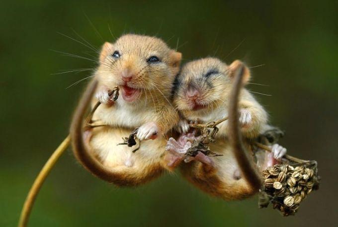 Ζευγάρια ζώων που αποδεικνύουν ότι η αγάπη υπάρχει και στο ζωικό Βασίλειο 4