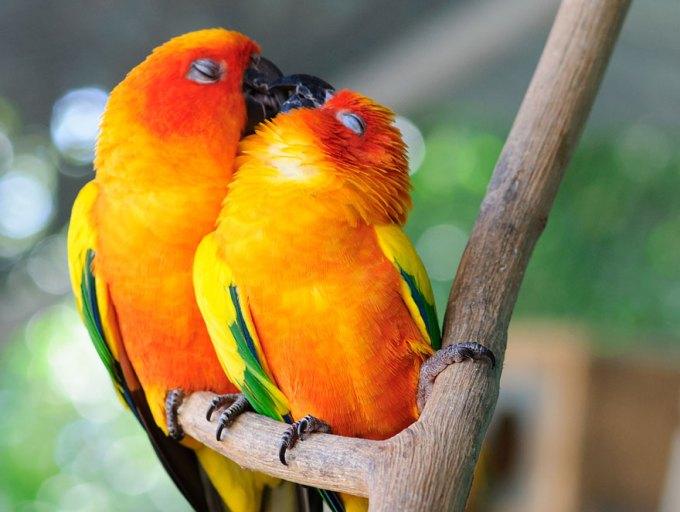 Ζευγάρια ζώων που αποδεικνύουν ότι η αγάπη υπάρχει και στο ζωικό Βασίλειο 9