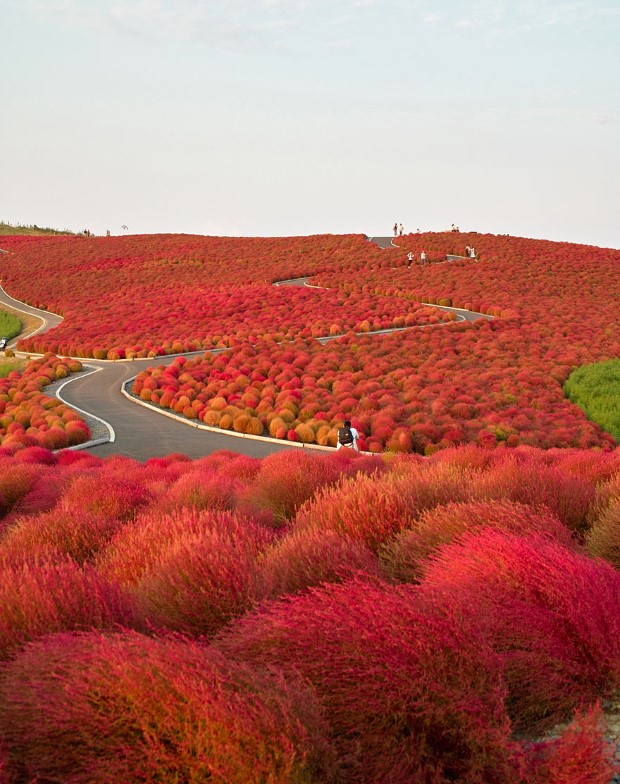Hitachi Seaside Park, Ιαπωνία