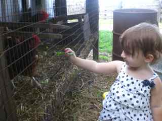 Our Grand-Daughter Alexis feeding the Chickens
