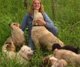 Breeding HavaPoo & YorkiPoo puppies