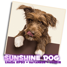 sunshine-dog