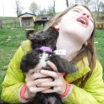 Designer YorkiePoo Puppies for sale, HavaPoo Puppies, Small Non-shedding, hypoallergenic