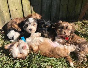 Puppies napping in the sun