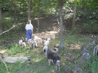 Walking in woods 2