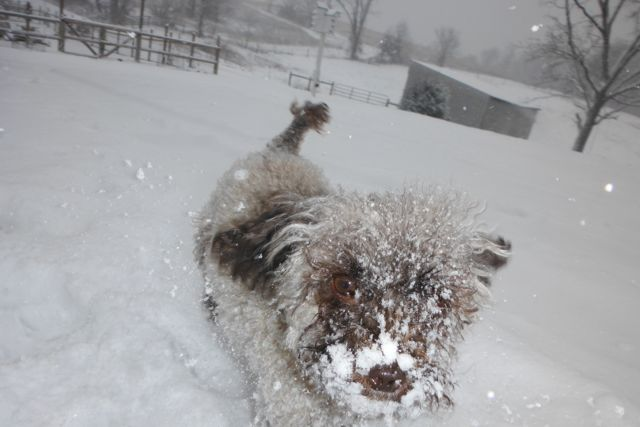 All my Dogs playing in the snow