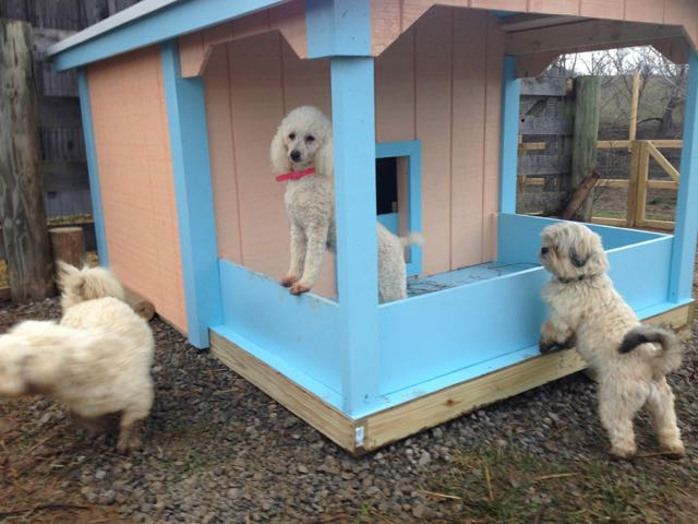 Pretty New DogHouse & ANOTHER PlayYard