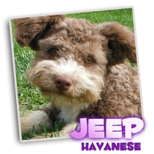 Daddy - Jeep