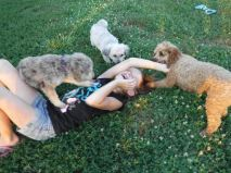 Mini Poodle mix Puppies for Sale