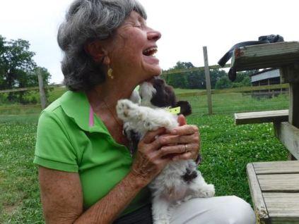 Poodle Yorkie Havanese Breeder Ohio Puppies for Sale