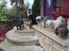 DDKiKi friends porch