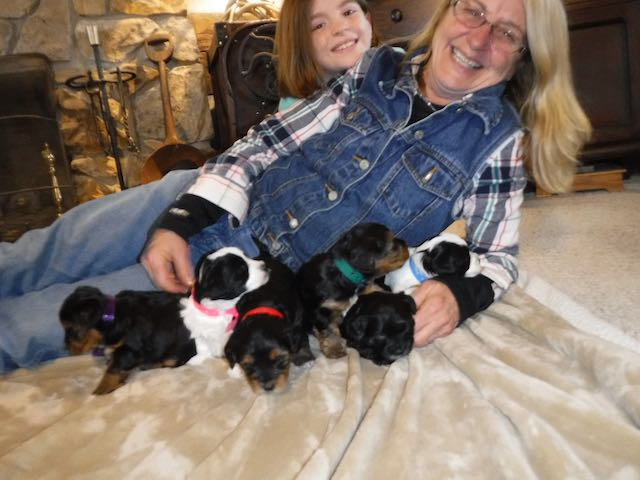 YorkiPoo Puppies for sale breeder