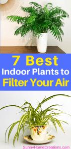 7 Best Indoor Plants to Filter Your Air.