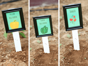 Picture Frame Plant Marker