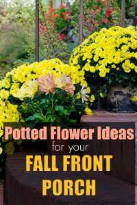 Potted Flower Ideas for your fall front porch
