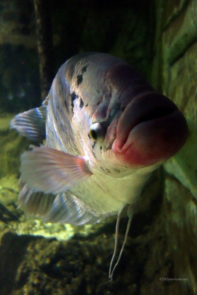 South Bank SEA LIFE London Aquarium