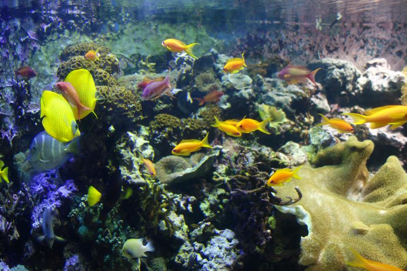 best-places-to-propose-in-london-sealife-aquarium