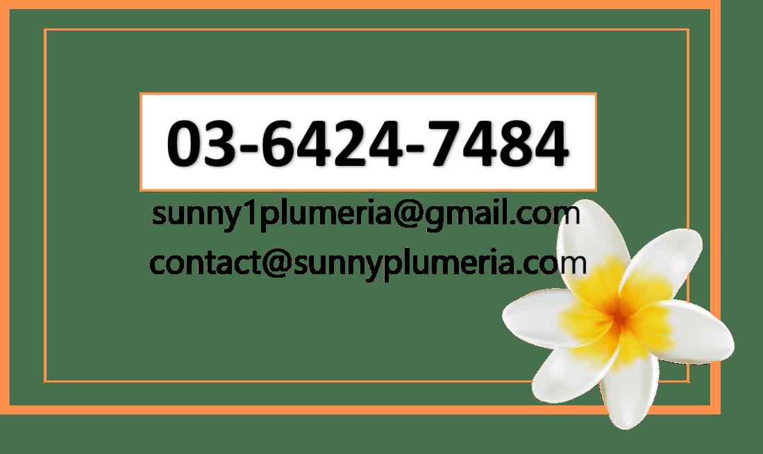sunnyplumeriacall