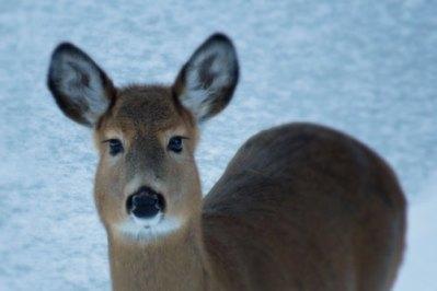 curious-deer