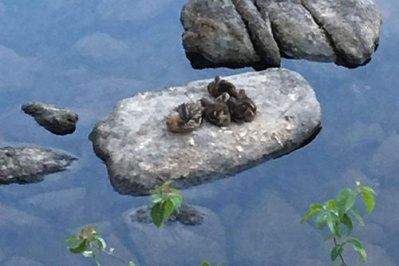summer-chicks1