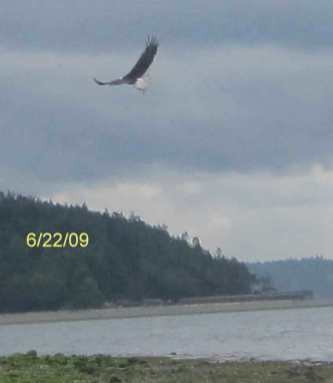 manaco-eagles-6