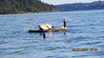 manaco-seal-raft-5