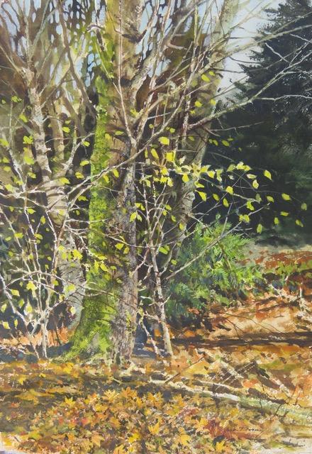 Northern Moss