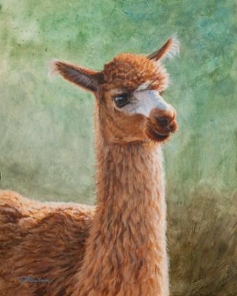 brown_alpaca