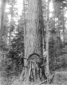 camano logging 3