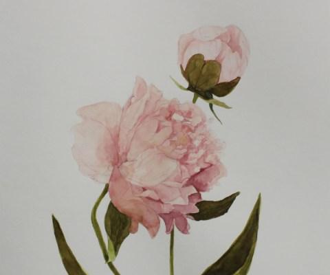 Jackie Dorsey Watercolors