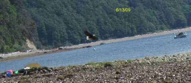manaco-eagles-4