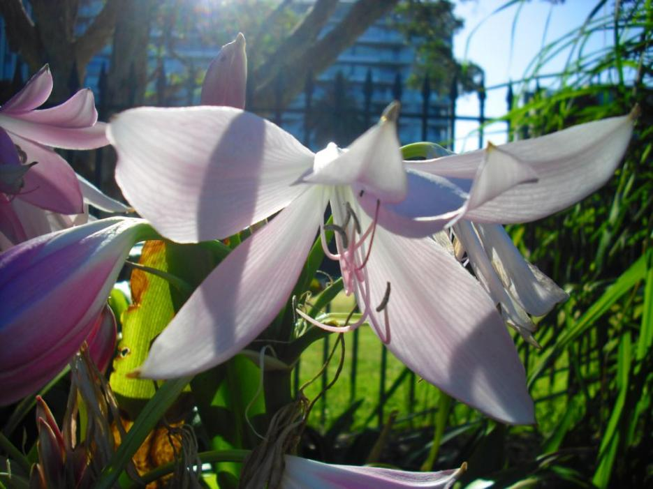 Sydney Tipp Royal Botanic Garden