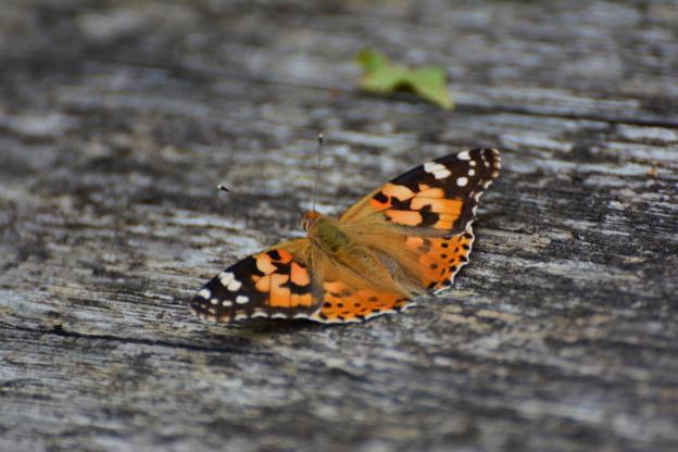 Fotografieren im Zoo: Schmetterling im Zoo Hannover