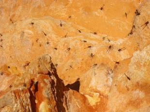 Roadtrip Australien Westküste Broome