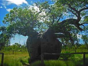 Roadtrip Australien Prison Tree Derby
