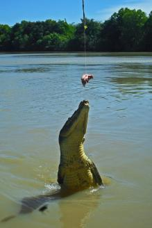 Roadtrip Australien Jumping Crocodiles Adelaide River