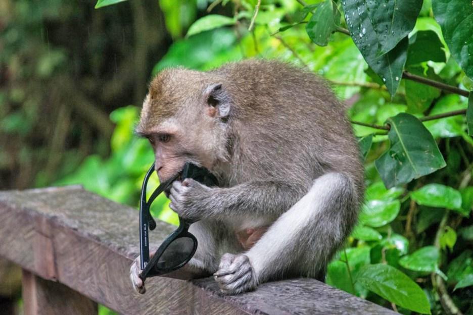 Affenwald Ubud Monkey Forest