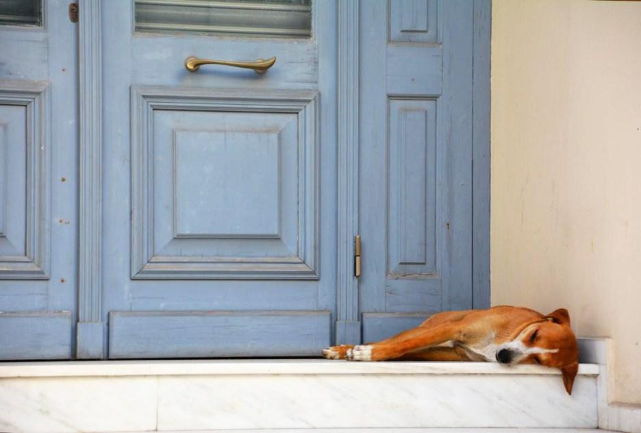 Schlafender Hund liegt vor Tür auf Kreta