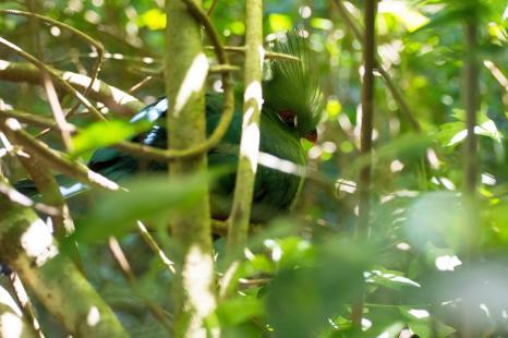 Garden Route Südafrika Sehenswürdigkeiten Tipps Highlights Birds of Eden