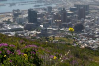 Sehenswürdigkeiten Kapstadt Signal Hill
